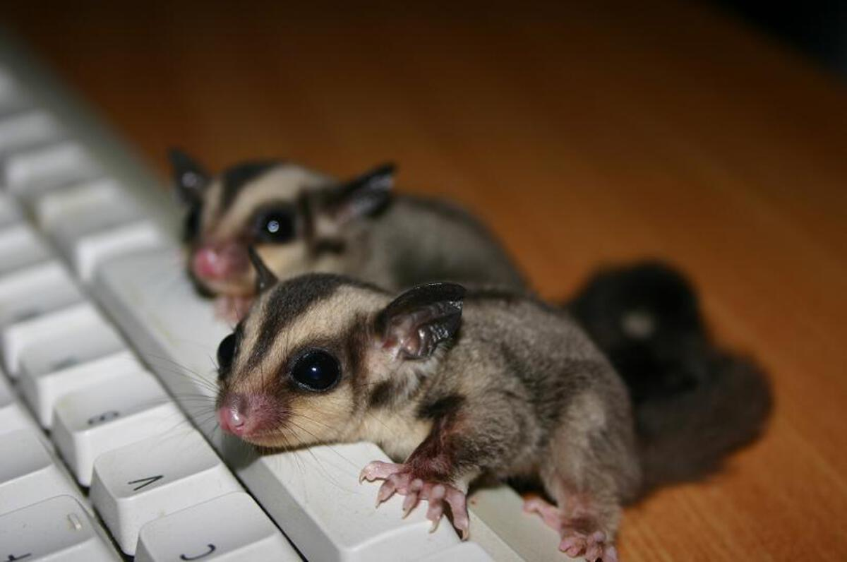 Baby Gliders on a Keyboard